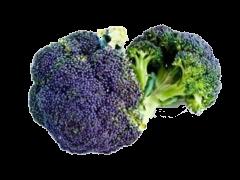 Couve Brócolo Roxo
