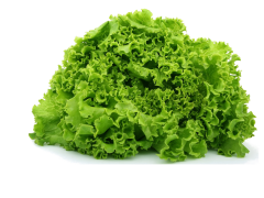 Alface Frisada Verde